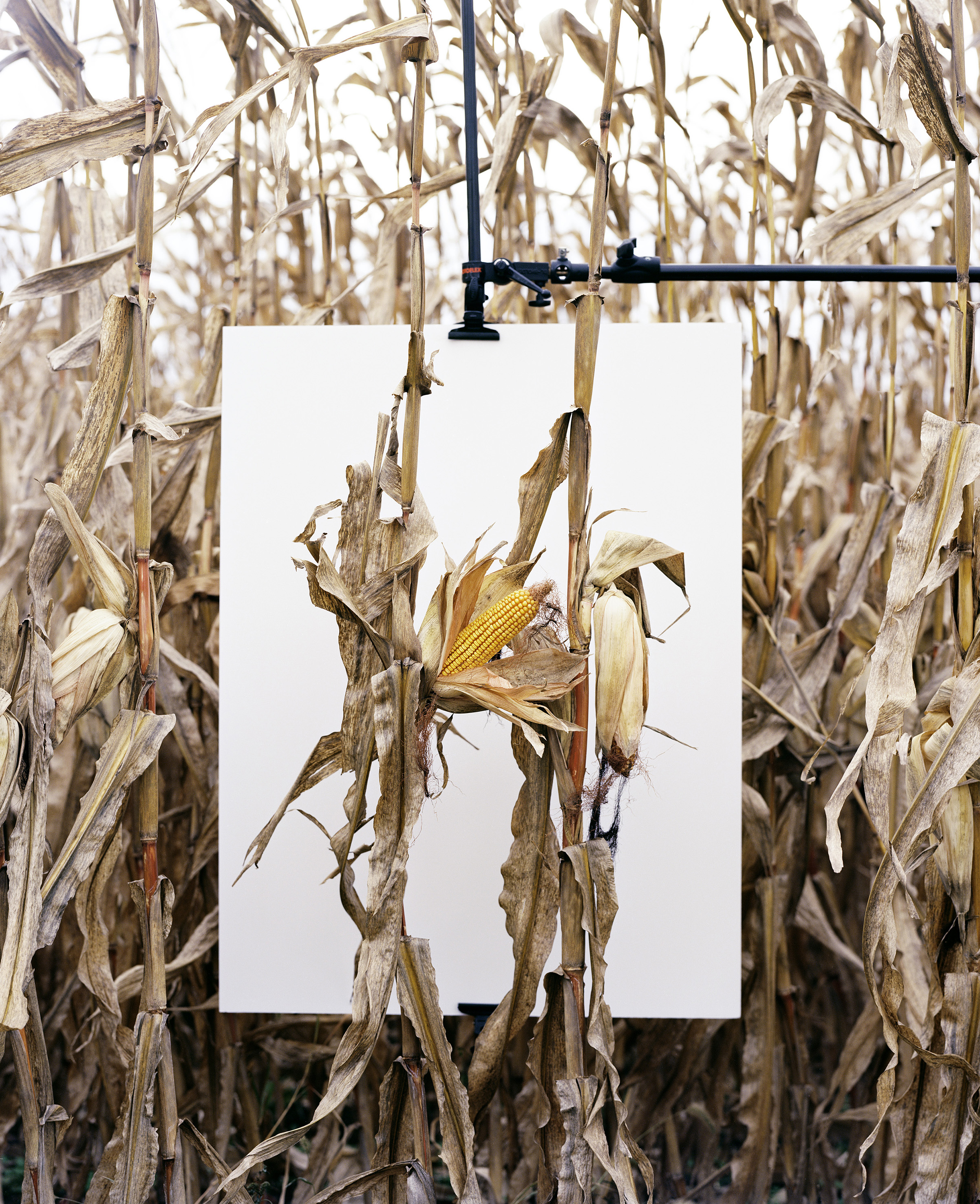 Mathieu Asselin (Γαλλία/Βενεζουέλα, γ. 1973) Van Buren, Ιντιάνα, 2013 Από τη σειρά Monsanto: A Photographic Investigation, 2016 Ευγενική παραχώρηση του καλλιτέχνη